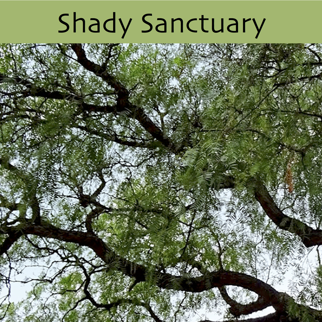 Shady Sanctuary